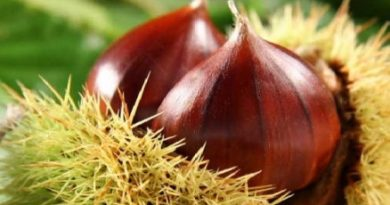 Sagra della castagna di Vallerano: il terzo fine settimana all'insegna del prodotto DOP della Tuscia viterbese