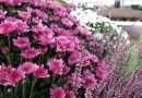 Anche a Viterbo torna il Garden Festival d'Autunno: rinascita con le piante