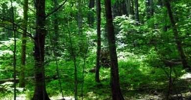 Effetto del riscaldamento climatico sulle foreste vetuste: uno studio dell'Unitus