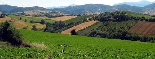 agricoltura-campi
