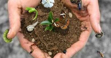 Giornata mondiale della Biodiversità: Coldiretti e Confagricoltura il valore aggiunto delle produzioni per la salvaguardia del paesaggio e dell'ambiente
