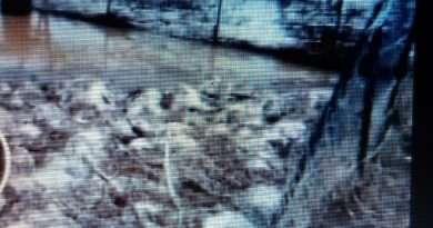 Strage per il maltempo: morte 110 pecore a Pescia Romana. Straripa il Fiora (2 video)