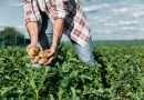 Usb, Agricoltura: giovedi il Tavolo per discutere le condizioni dei braccianti nel Viterbese