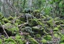 Trekking alla Selva del Lamone