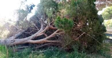 NewTuscia Tv: Degrado tour 2020 a Viterbo. Via Rasetti, albero caduto abbandonato e altri a rischio