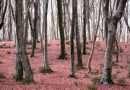 """Messa in sicurezza foreste demaniali: nella Tuscia presto """"sistemate"""" Monte Raschio e Bosco Montagna"""