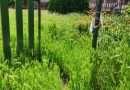 """Luisa Ciambella: """"Bambini costretti a stare tutto il giorno in classe perché nel giardino l'erba è troppo alta"""""""