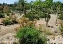 """L'Orto Botanico """"Angelo Rambelli"""" dell'Unitus festeggia 30 anni"""