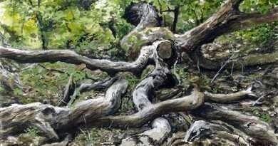 Il Seminario di disegno naturalistico di Marco Preziosi è tornato!